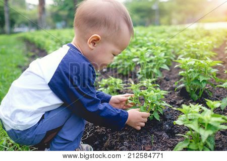 Cute little Asian 18 months / 1 year old toddler baby boy child planting young tree on black soil in the green garden Save the world and environment concept Selective focus at child's right hand