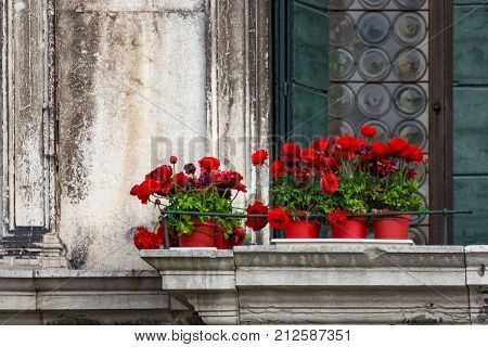 Red flowers in red pots against the background of a vintage building in Venice, Italy. Red flowers on an old balcony without people. Balcony with red flowers. Venetian architecture. Venetian balcony.