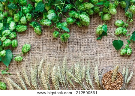 Green Fresh Hops with Wheat as copy space frame text area on sackcloth background. Flat lay. Still life. Top view