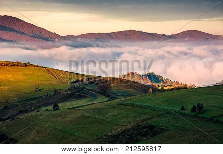 grassy hillside above the thick fog in mountains. gorgeous sunrise in rural landscape