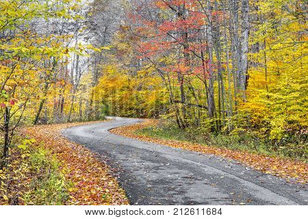 A blacktop road winds through a forest painted in late autumn colors..