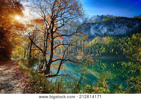 Beautiful view of idyllic colorful autumn scenery with Dachstein mountain summit reflecting in crystal clear Gosausee mountain lake in fall Salzkammergut region Upper Austria Austria