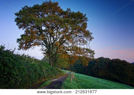 Hiking trail with tree and meadows close to Odenthal, Germany