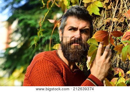 Man With Strict Face On Autumn Ivy Leaves Background