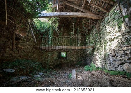 View of stone desolated house from inside in lush green forest.