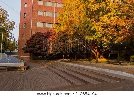 Tress In Fall Colors Bathed In Soft Sunlight