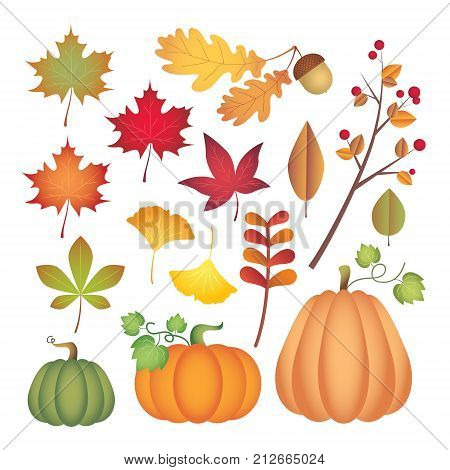 Set of autumn design element: maple leaf, oak leaf, acorn, pumpkin, ginkgo leaf and tree branch with fruit. Fall clip art isolated on white. Vector illustration.