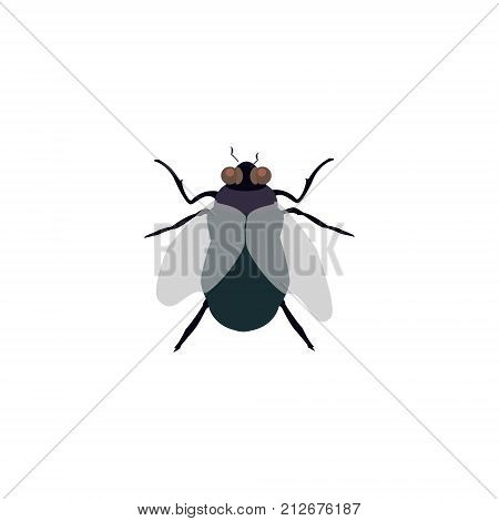 Fly Insect Vector