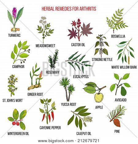 Best herbal remedies for arthriris. Hand drawn vector set of medicinal plants