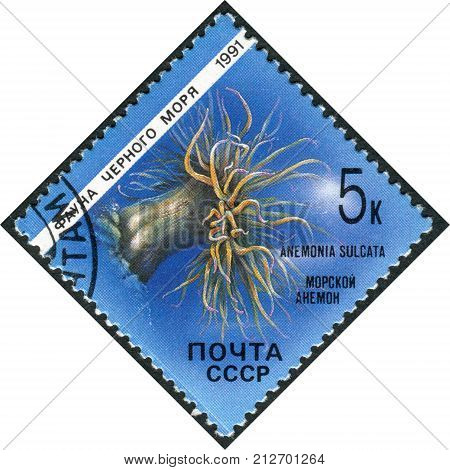 USSR - CIRCA 1991: Postage stamp printed in USSR shows the fauna of the Black Sea Anemone (Anemonia sulcata) circa 1991