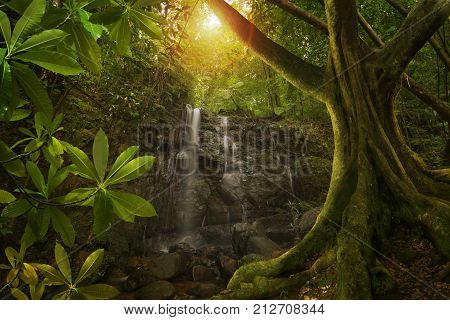 Deep jungle with river and waterfalls of Southeast Asia