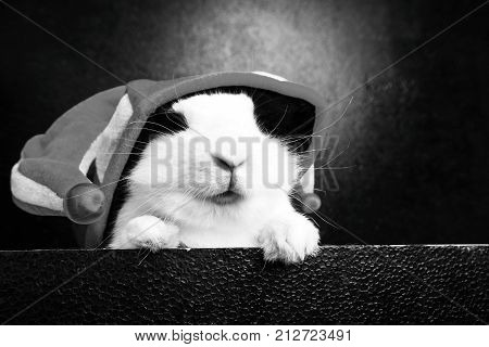 White rabbit with a joker cap on a black background poster