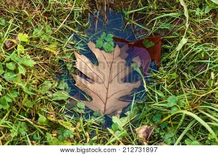 brown leaf in puddles, One yellow leaf in the puddle. Autumn background concept
