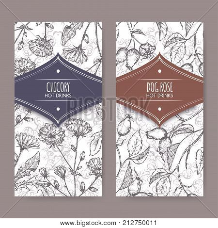 Two labels with Cichorium intybus aka common chicory and Rosa canina aka dog rose sketches. Hot drinks collection. Great for cafe, bars, tea ads.