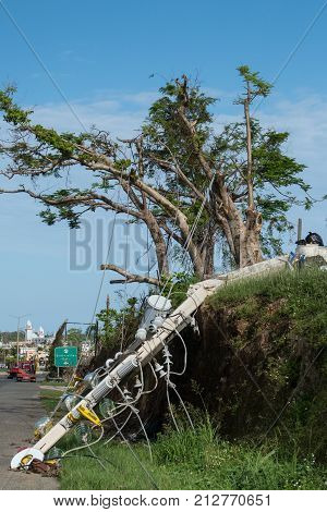 Damage to trees powerlines and building in Puerto Rico from Hurricane Maria Sep 2017
