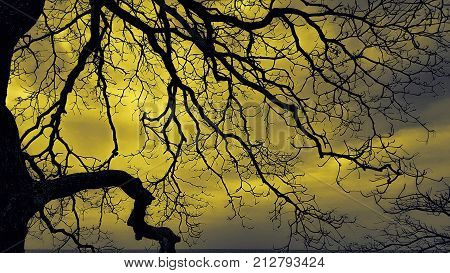 a deciduous tree with a bright glowing yellow sky