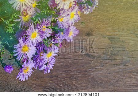 Purple Alpine Aster On Wooden Background