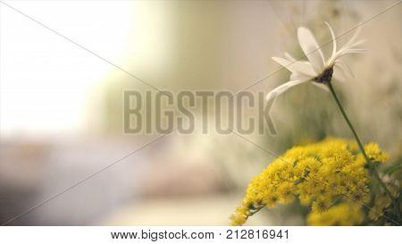Daisy On The Bedside Table. Daisy Flower On Green Meadow. Spring Daisy In The Meadow. Daisy Flower,