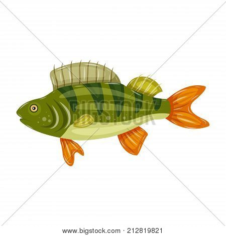Freshwater flat icon colorful perch fish isolated on white background. Marine fresh food logo.
