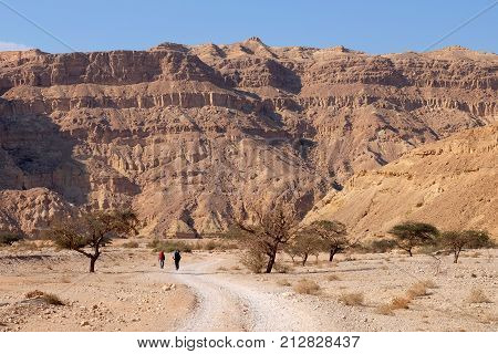 Unrecognized couple of hikers walking on the road in Negev desert Israel.