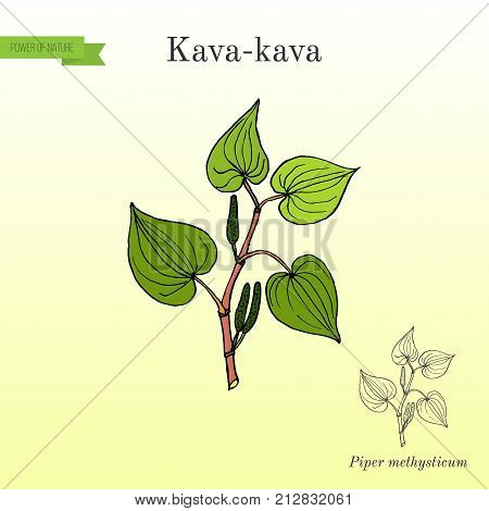 Kava-kava piper methysticum , medicinal plant. Hand drawn botanical vector illustration