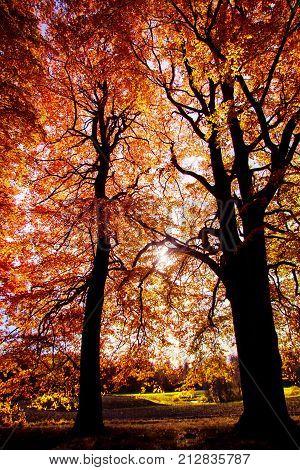 höst träd från bokskogen i Malmö Sverige
