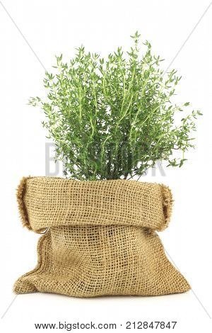 fresh thyme in a burlap bag on a white background