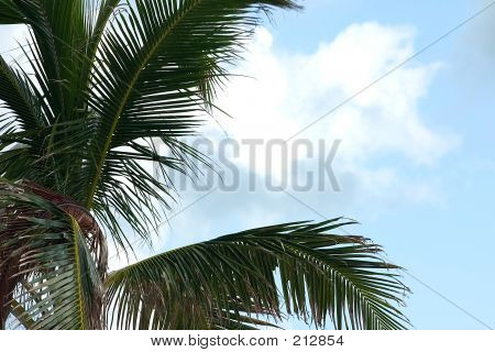 Palm Branches And Sky