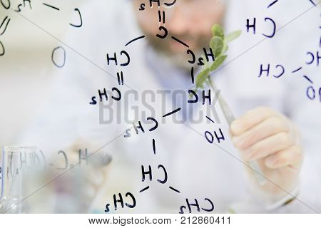 Modern biologist in gloves holding green plant in pincers behind transparent board with chemical formula