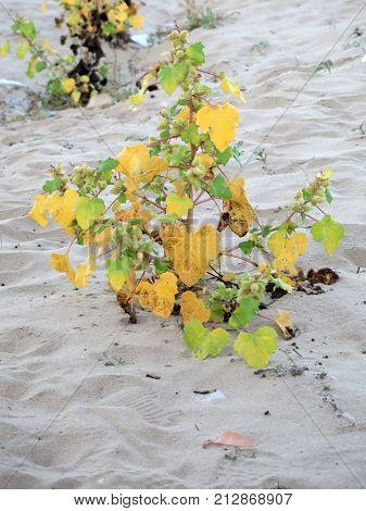Hardy plant growing in sand on Italian beach