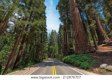 Driving through Avenue of the giants sequoia in Sequoia National Park, California, USA.