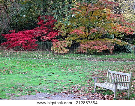 Lonely Wood White Bench in a Wimbledon Park in Autumn at the end of the day
