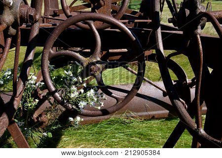 Wild flowers grow through a steering wheel of an old road grader
