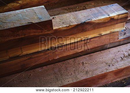 Chico Zapote Manilkara zapota wood from Mexico rainforest chewing gum tree