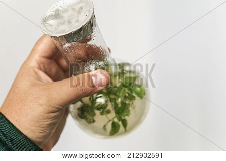 Researcher hand holds micro plant in test with tube. Micropropagation technology in vitro and microbiology concept