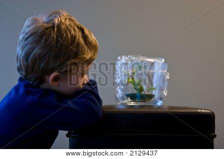 Pet Frog Watch