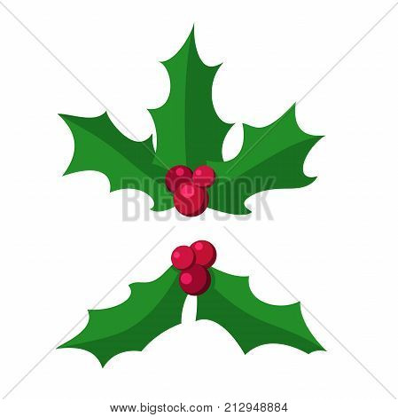 Holly berry leaves isolated. Holly berry leaves Christmas icon. Vector Illustration Isolated from Background. Branch Of Green Leaves and Red Berries of Ilex aquifolium