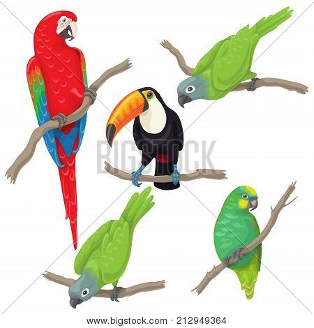 Vivid tropical birds set. Green parrots red-and-green macaw and toucan sitting on branches isolated on white background. Vector flat illustration.