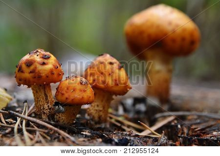 Mushrooms and Moss in the forest in autumm