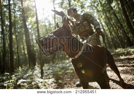 Picture of airsoft player with dog and submachine gun in forest on reconnaissance