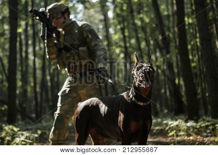 Image of airsoft player with dog and submachine gun in forest on reconnaissance