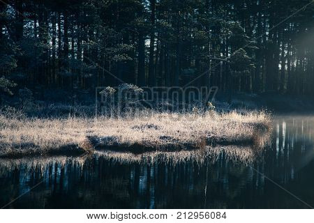 A beautiful swamp pond with a raising mist during the sunrise. Quagmire in a frowen wetlands in autumn. Bright light with sun flares. Beautiful scenery in Latvia.