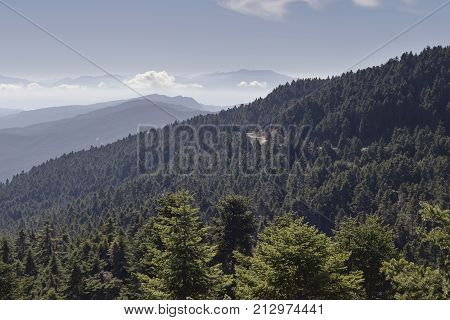 Mountain landscape. View of the mountains, pine forests in the morning, foggy day (western Greece, mountain Nafpaktia)