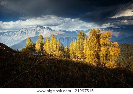 Alpine meadows in the sunny light. Location Upper Svaneti, Georgia country, Europe. Main Caucasian ridge. Scenic image of wild area. Discover the beauty of earth. Photo of climate change.