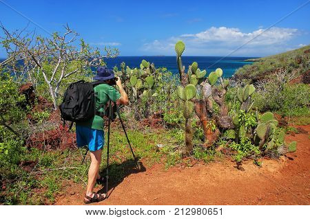 Man photographing Galapagos prickly pear on Rabida Island in Galapagos National Park Ecuador. It is endemic to the Galapagos Islands.