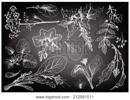 Vegetable Salad, Illustration of Hand Drawn Sketch Delicious Fresh Green Leafy and Salad Vegetable on Black Chalkboard. poster