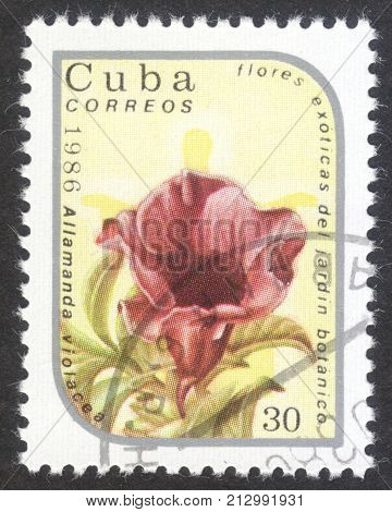 MOSCOW RUSSIA - CIRCA OCTOBER 2017: a post stamp printed in CUBA shows Allamanda violacea the series