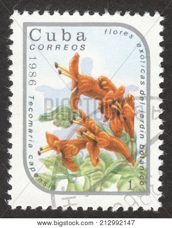 MOSCOW RUSSIA - CIRCA OCTOBER 2017: a post stamp printed in CUBA shows Tecomaria capensis the series