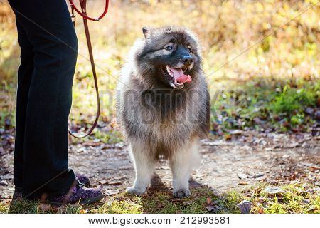 The hostess stands with the leash beside the dog on the nature