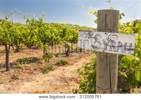 Syrah Sign On Wooden Post In A Grape Vineyard.